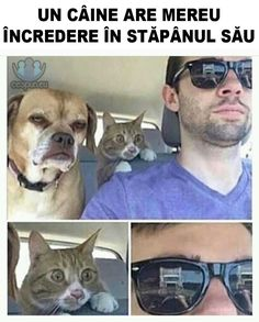 Câinele are încredere! #caine #pisica #prieteni #memeinromana Lol So True, Dove Cameron, Humor, Funny Images, Zodiac, Jokes, Social Media, Comics, Pets