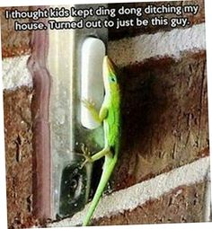 Top 20 Lol Funny images (03:40:16 PM, Thursday 30, March 2017 PDT) - LOL MANIA CLUB