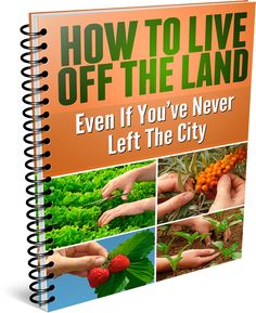 How To Grow Your Own Healthy Food - thesurvivalgiant.com