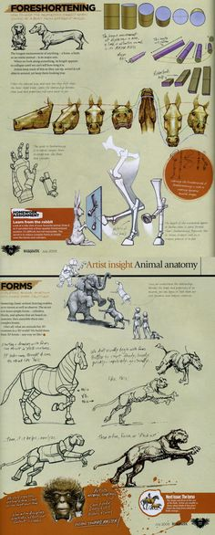 Animal Anatomy- By Marshall Vandruff, Pg. Animation Reference, Drawing Reference, Figure Drawing, Animal Sketches, Animal Drawings, Art Drawings, Drawing Art, Horse Anatomy, Animal Anatomy