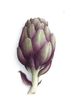Artichoke painting in purple and green | vegetables: artichoke . Gemüse: Artischocke . légume: artichaud |