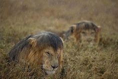 Natural History Museum Wildlife Photographer Of The Year 2013