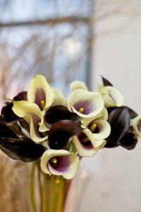 I've always love calla lilies.  Carried them on my wedding day.  Such beautiful contours and colors.
