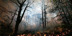 Incêndios que começaram no início de agosto já consumiram 76 mil ha de…
