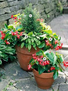 Try Repetition    Repetition is a trick used by many top garden designers. You can do the same thing with your container gardens. Here, bright begonias enliven a pot of herbs for the kitchen and create a focal point of color.    A. Begonia 'Dragon Wing Red' -- 4   B. Golden sage (Salvia officinalis 'Aurea') -- 2   C. Rosemary (Rosmarinus officinalis) -- 1