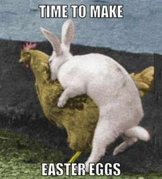 Funny Easter Pictures Meme