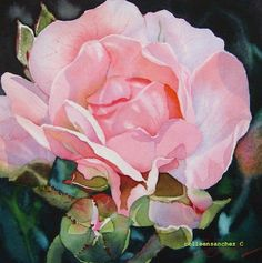 I've not been very good at painting roses.  I sure could take a few lessons from Colleen Sanchez.  Her techniques really capture how the light hits the rose.  I also love the variations of colors she applies with her washes.  http://dailypaintersofhawaii.blogspot.com/