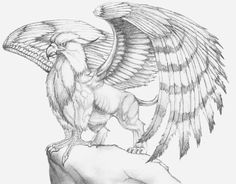 gryphon art | Gryphon by ~TwoPinkElephants on deviantART