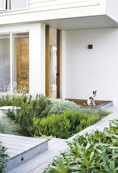 Urban Garden Design Fragrant plantings combine with a relaxed, contemporary approach in this family-friendly garden. - Fragrant plantings combine with a relaxed, contemporary approach in this family-friendly garden. Modern Landscape Design, Modern Garden Design, Landscape Plans, Modern Landscaping, Contemporary Landscape, Front Yard Landscaping, Patio Design, Backyard Landscaping, Landscaping Ideas