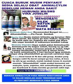 Hallo Animal Lovers,  KAMI MELAYANI SELURUH INDONESIA HUBUNGI VIRA JOSELIN WA / SMS 085710885097 Pakailah Animalcyclin Untuk Pencegahan Penyakit Sebulan 1x, Untuk Pengobatan 2x perhari ( hewan dewasa ) 1x perhari ( anakan )  3 atau 5 hari . Pokoknya Animalcyclin wajib ada di Kotak Obat Hewan anda. Aplikasinya mudah, tinggal diaduk di Minumannya. Atau dilarutkan di air secukupnya disuapi menggunakan spuit , Untuk netralizir rasa pait air bisa diganti dengan susu bearbrand + madu atau Yogurt…