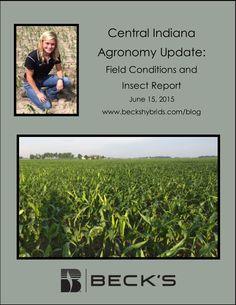 Agronomy Update: Field Conditions and Insect Report from Christy Kettler - Central Indiana Published on June 15, 2015