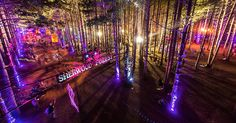 Electric Forest Music Festival Best camping EDM