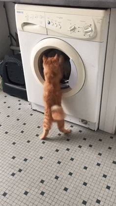 Funny Cute Cats, Cute Funny Animals, Cat Videos Youtube, Pet Corner, Space Cat, Funny Animal Videos, Cat Gifts, Cat Memes, Crazy Cats