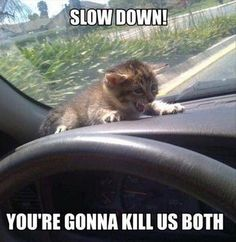 Slow Down! You're Gonna Kill us Both funny lol humor funny pictures funny pics funny images funny animal pictures funny animal memes really funny pictures funny pictures and images funny animal captions funny animal pics with captions Funny Animal Jokes, Funny Cat Memes, Funny Animal Videos, Funny Animal Pictures, Funny Dogs, Funny Humor, Animal Pics, Funny Photos, Funny Sayings