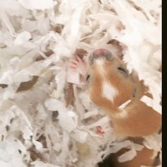 Adorable gerbil baby ❤️ see more at ohanagerbils.com Super Cute Animals, Gerbil, Ohana, Are You Happy, Pets, Baby, Newborns, Baby Baby, Infants