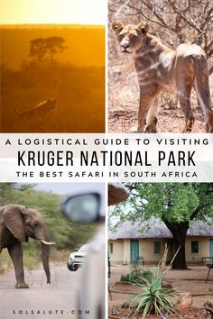 A Complete Guide to Visiting Kruger National Park, South Africa — Sol Salute Kruger National Park Safari, National Parks, Africa Destinations, Travel Destinations, Travel Guides, Travel Tips, Travel Advice, Solo Travel, African Countries