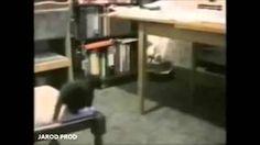 Compilation de chutes de chats 2014 - YouTube