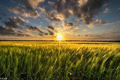 Golden greenfield by Wilco van der Laan Fotografie on 500px