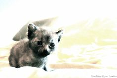 The Smallest Face Small Faces, New Hobbies, Have Fun, Fox, Princess, Cats, Pictures, Photography, Animals