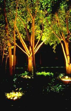 landscape lighting solar lights outdoor gardens garden spotlights tree