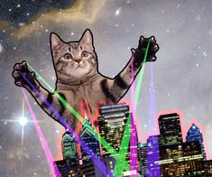 tabby attacks plays with city - Cat memes - kitty cat humor funny joke gato chat… Crazy Cat Lady, Crazy Cats, Kittens Cutest, Cats And Kittens, Trippy Cat, Cat Laser, Cat Attack, Kinds Of Cats, Gif Animé