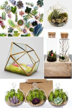 SUPER cool terrariums you can make with your kids for earth day.