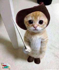 El gato con botas existe !!!