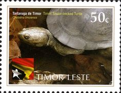 Country: East Timor Series: International Year of Biodiversity Catalog codes: Michel TL 384 Themes: Animals (Fauna) Laos, Philippines, Timor Oriental, Timor Leste, Southeast Asia, Offset, Turtle, Snake, Portuguese Food