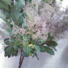 スモークツリー✨  もふもふ~  昨日スーパーの花屋さんで 見つけて衝動買い!  #スモークツリー #花のあるの暮らし #植物のある暮らし #flowerslovers #暮らしを楽しむ http://gelinshop.com/ipost/1524965668565292846/?code=BUpxDIpgBcu