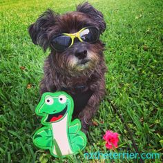 Oz the Terrier: 3 Great Ways to Play with PrideBites Toys