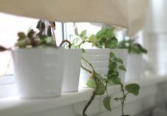greens in a window // A Beautiful Mess