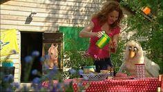 Filmpje bijen: Er staat een bijenkast in de tuin van het Clubhuis. Raaf probeert van alles om de lekkere honing uit de kast te krijgen. Carlijn bezoekt een imker en ziet hoe het echt moet.