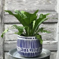 cali hand-painted pot With an eclectic hand-painted detail, the cali pot is perfect for the modern space. Pot has drain holes. Each one is hand-painted, so please expect variations.