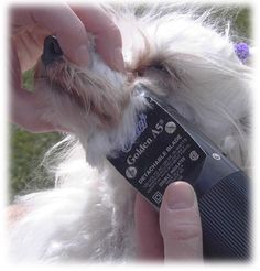 chinese crested grooming