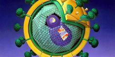 Il virus dell'AIDS funziona come terapia genica - http://www.lavika.it/2013/07/il-virus-dellaids-funziona-come-terapia-genica/