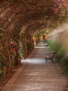 el tunel de las flores