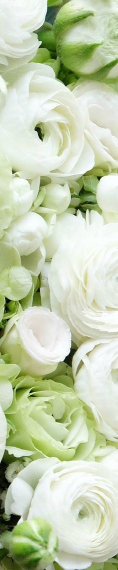 Advice on everything gardening All Flowers, Bridal Flowers, My Flower, Vintage Flowers, White Flowers, Flower Power, Beautiful Flowers, White Gardens, Spring Green