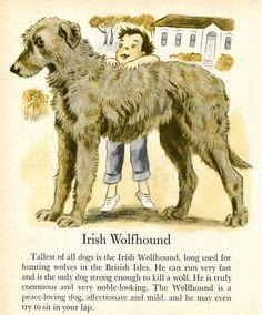 Image result for wolfhound illustration