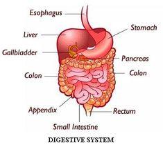 cool organs graphics - Google 検索