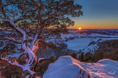 "Capture Wisconsin Photo Contest - ""Twisted Cedar Sunset"" by Monica Hall"