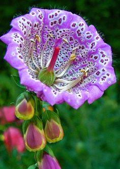 Imagini pentru imagini cu flori exotice