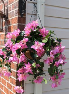 Silk Hanging Plant Orange Hibiscus With Long Fern Baskets Pinterest Plants And