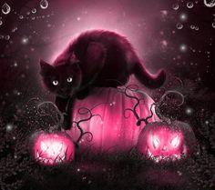 Black cat and pink pumpkins