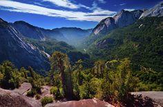 Los bosques chilenos son los más verdes que verás en tu vida. | 27 Imágenes que te harán querer viajar a Chile inmediatamente