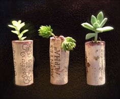 Magnetic wine cork planters for tiny succulent plants Cork Crafts, Crafts To Do, Diy Crafts, Handmade Crafts, Diy Planters, Succulent Planters, Indoor Succulents, Plantar, Everyday Objects