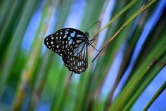 Butterfly by rangithnr, via Flickr