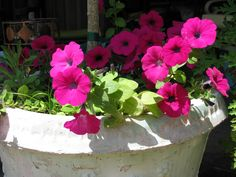Add To potted Tree's Potted Trees, Savannah Chat, Backyard, Dreams, Plants, Summer, Trees In Pots, Patio, Summer Time