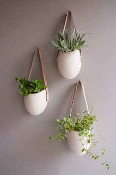 A different way to have greenery at home. Make the most of the space under the ceiling. Enjoy while looking at them from below....