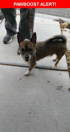 Is this your lost pet? Found in Las Vegas, NV 89128. Please spread the word so we can find the owner!    Nearest Address: Near W Sky Ridge Rd & N Tranquil Meadows Ln