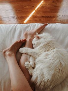 Jennifer Hail, VSCO grid | Sweet afternoon cat naps